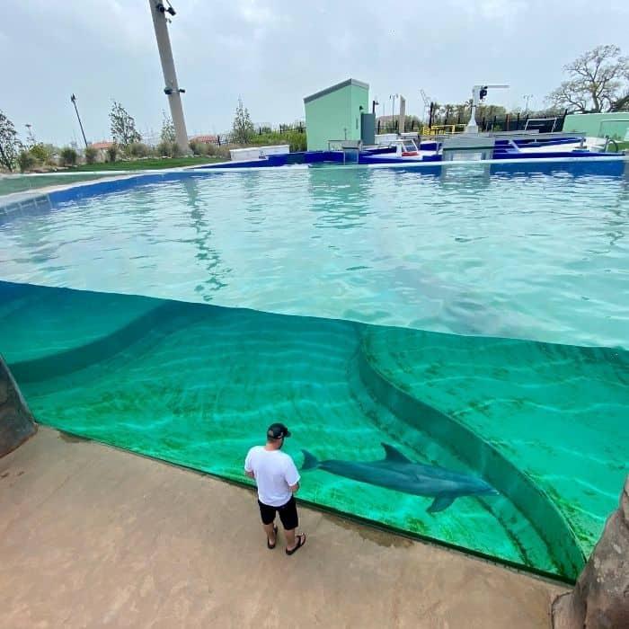 dolphin exhibit at Mississippi Aquarium