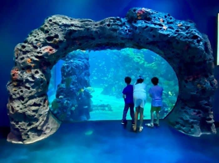 kids at Mississippi Aquarium