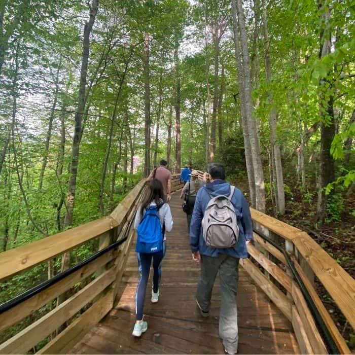 Canyon Rim Overlook Boardwalk Trail in West Virginia