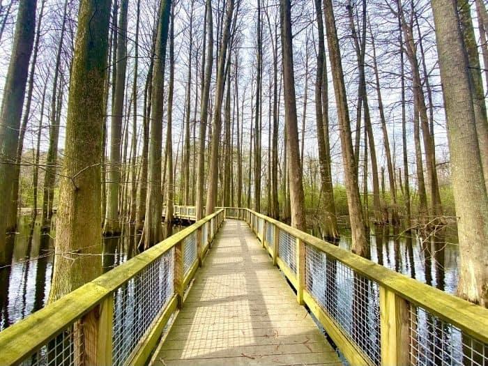 boardwalk trail at Wheeler National Wildlife Refuge