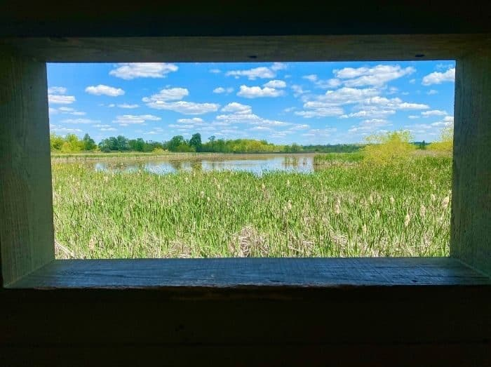 view of the marsh from the wildlife viewing area at Miami Whitewater Forest