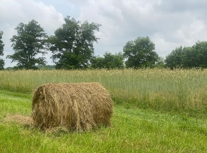 hay bail at Woodhaven Bed and Breakfast