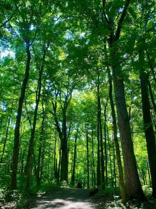 hiking at Glen Helen Nature Preserve