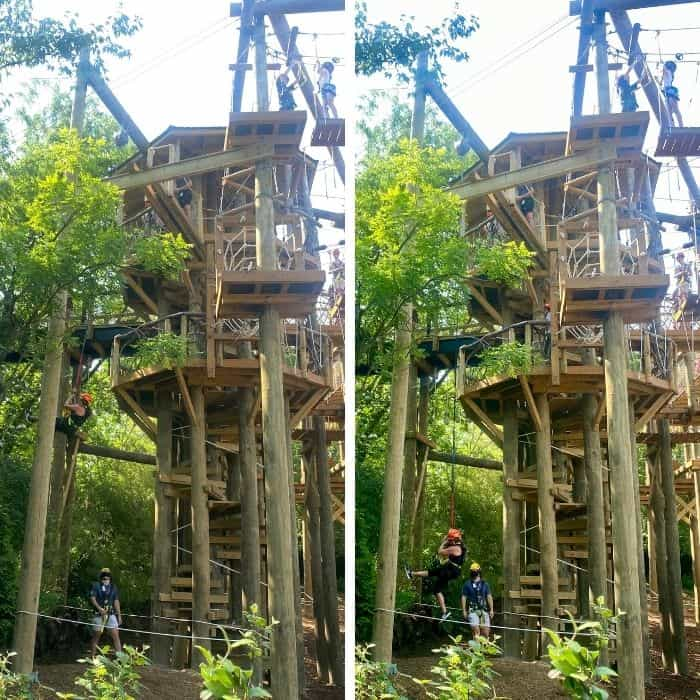 quick drop on the aerial adventure course at the Cincinnati Zoo