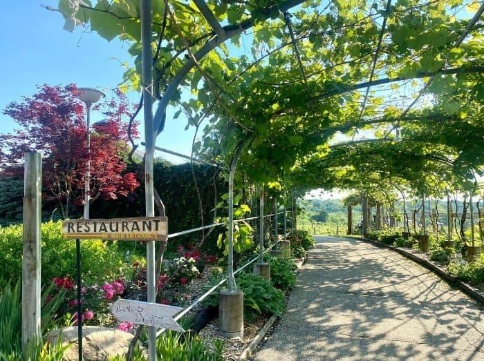 trellis at Vinoklet winery