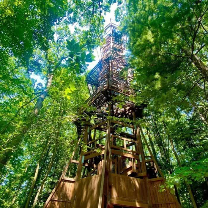 Emergent-tower-Holden-Arboretum