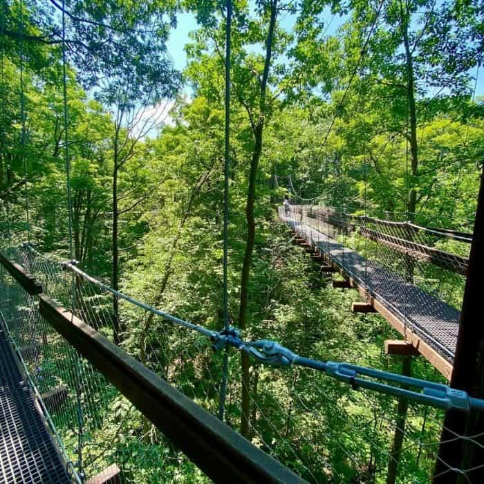 Murch-Canopy- Walk-Holden-Arboretum