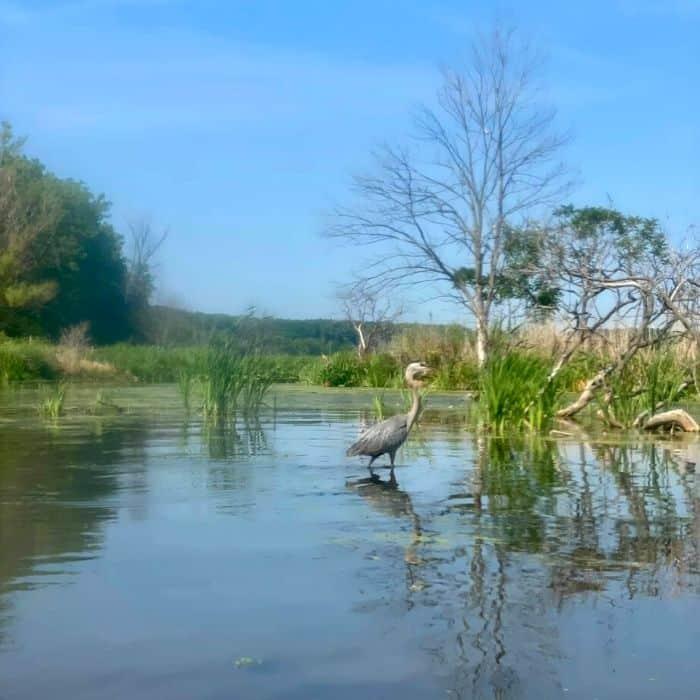 crane-Mentor-Lagoons- Nature -Preserve- and- Marina
