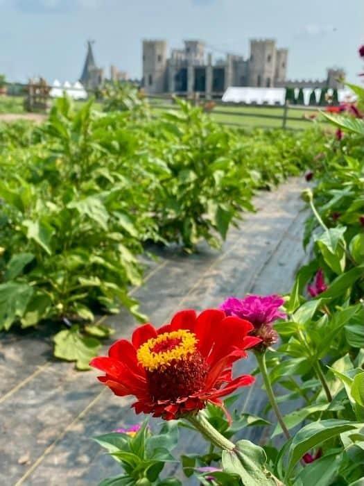 garden at The Kentucky Castle