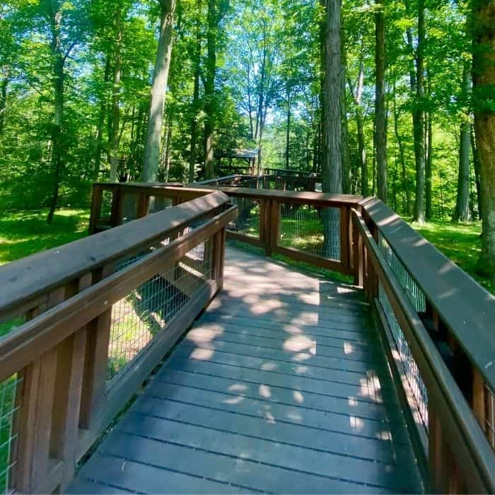 wheelchair accessible ramp on the Murch Canopy Walk