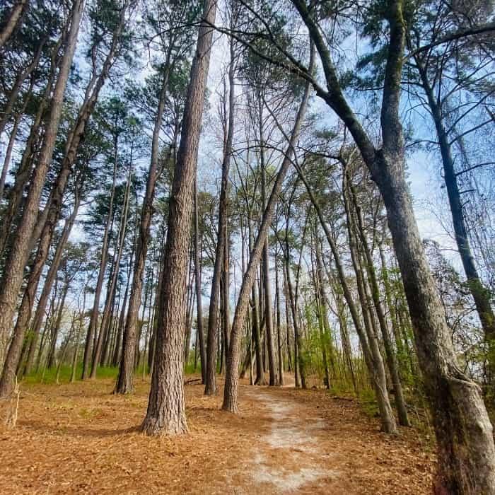 Point Mallard Walking Trails