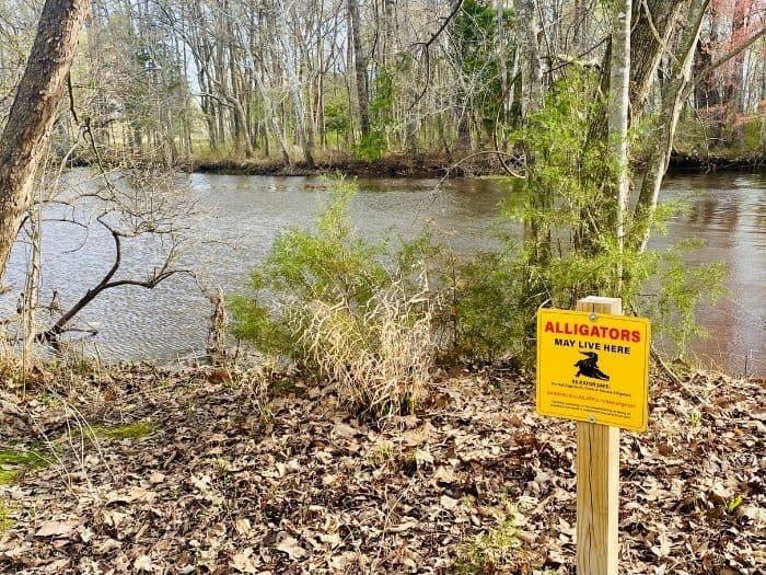 alligator sign at Point Mallard Walking Trails