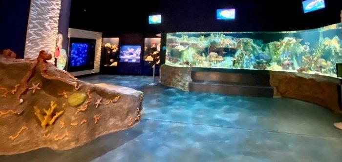 aquarium at Cook Museum of Natural Science