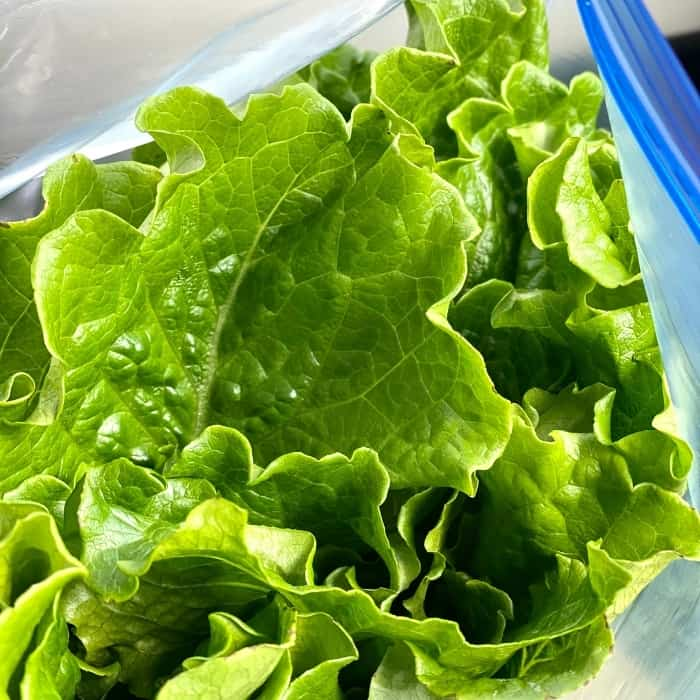 lettuce from Manna House Hydroponic Gardens