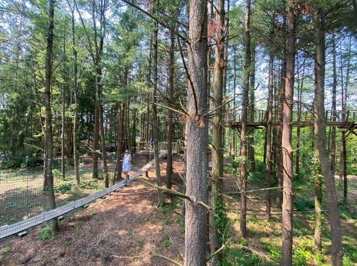 woman walking on the Canopy Walk at Kirkwood Adventure Park