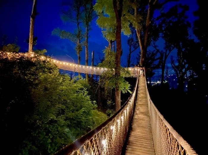 Treetop Skywalk at night at Anakeesta